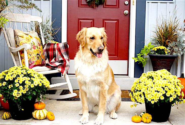 fall tour, fall porch, fall decorating, diy outdoor pillow, decorating on a budget